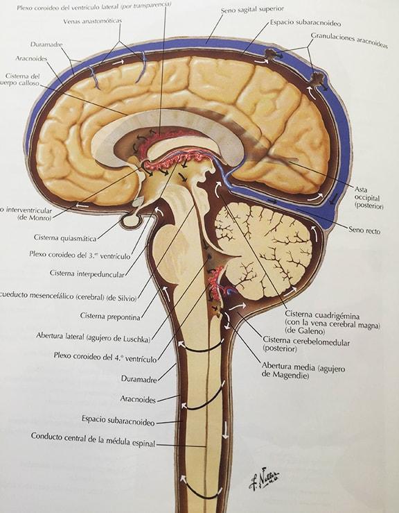 liquid-cefaloraquidi